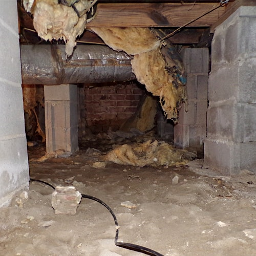 6 Signs That You Should Dehumidify Your Crawl Space Right Away
